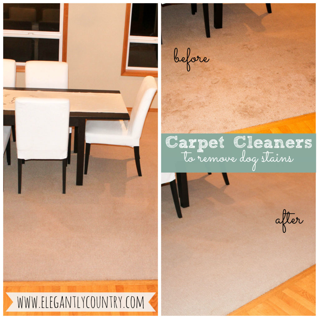 best carpet cleaners to remove dog stains